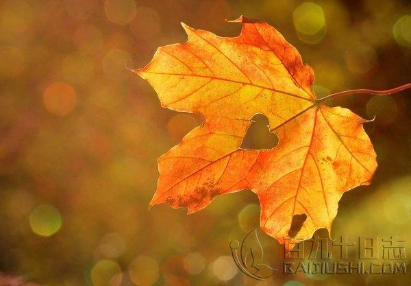 叶子的离开是风的追求,也是树的不挽留!_www.baijiushi.com